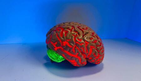 brain prop.