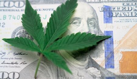 canna leaf on dollar bill