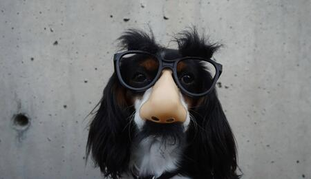 a funny dog picture.