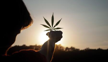 facing a cannabis leaf towards the sun.
