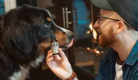 dog getting some cannabis oil.