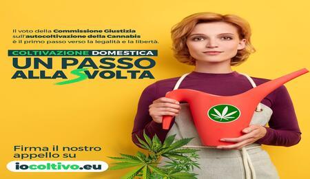 Depenalizzazione e coltivazione di cannabis: un passo alla Svolta