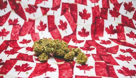 Focus: Canada e legalizzazione della cannabis