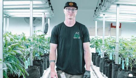 Crianza de cannabis.