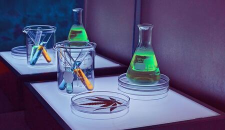 cannabis lab.