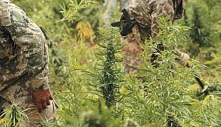 """La excusa de """"las drogas"""" permite la penetración de fuerzas especiales en temas domésticos."""