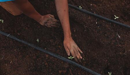 Pěstování konopí a životní prostředí