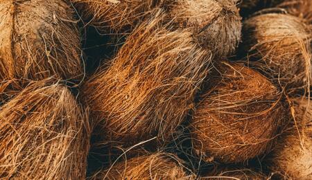 kokosový substrát - pěstování