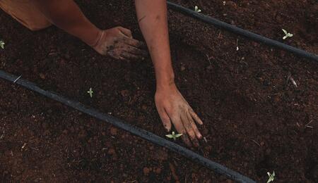 planting at a cannabis farm.