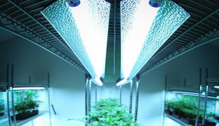 lighting set up in a grow room.