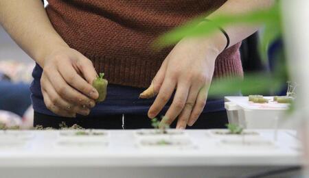 hydroponics setup for growing cannabis.