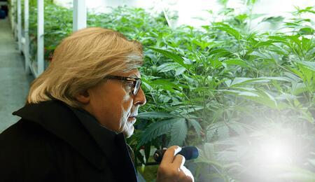 Vittorio Sgarbi contro il proibizionismo della cannabis