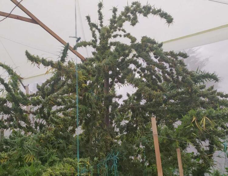 French grower en Colombie
