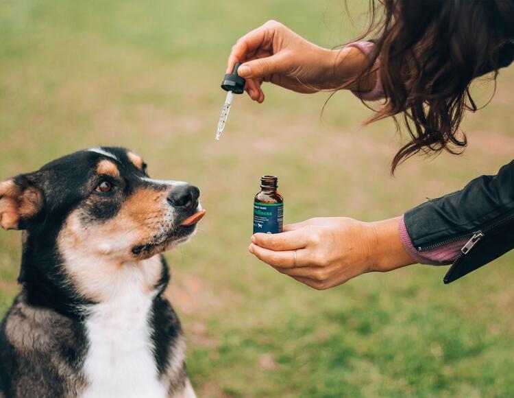 Colombia por autorizar cannabis para mascotas.