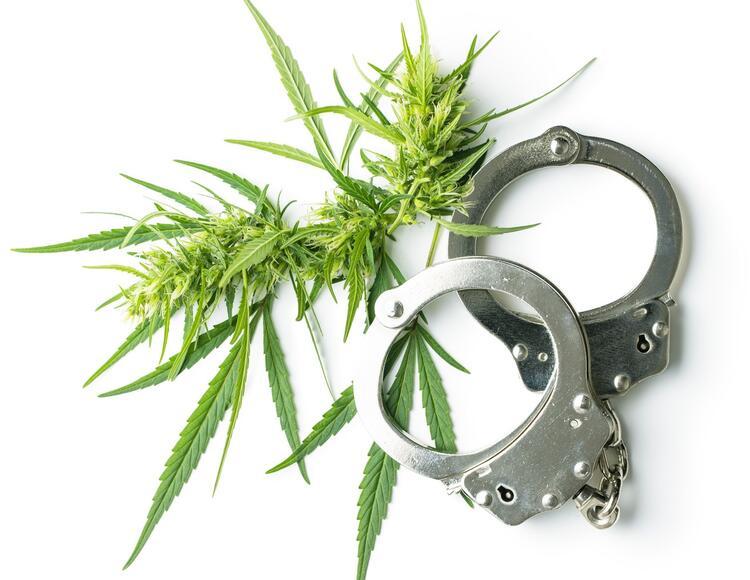 marijuana flower buds and handcuffs.