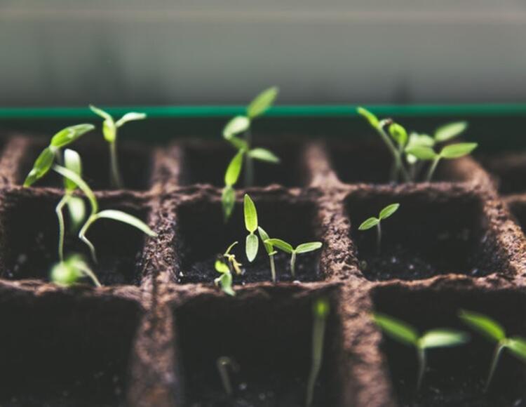 organic seedlings