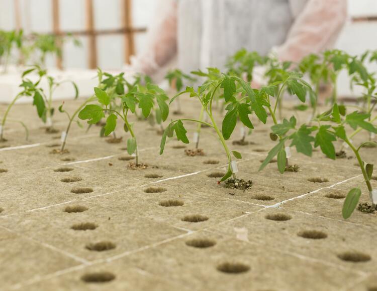 Správné pH – základ úspěšného pěstování