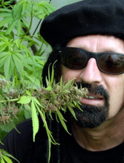 Cómo conseguir plantas gigantes de marihuana.