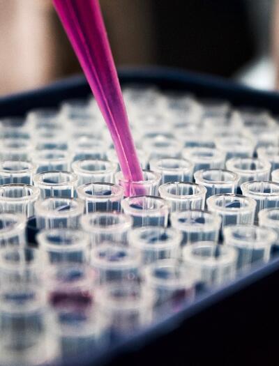 Konopné terpeny a cbd proti koronavirům