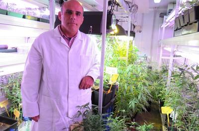 Salvador Soler en el cultivo de marihuana donde surge Panakeia